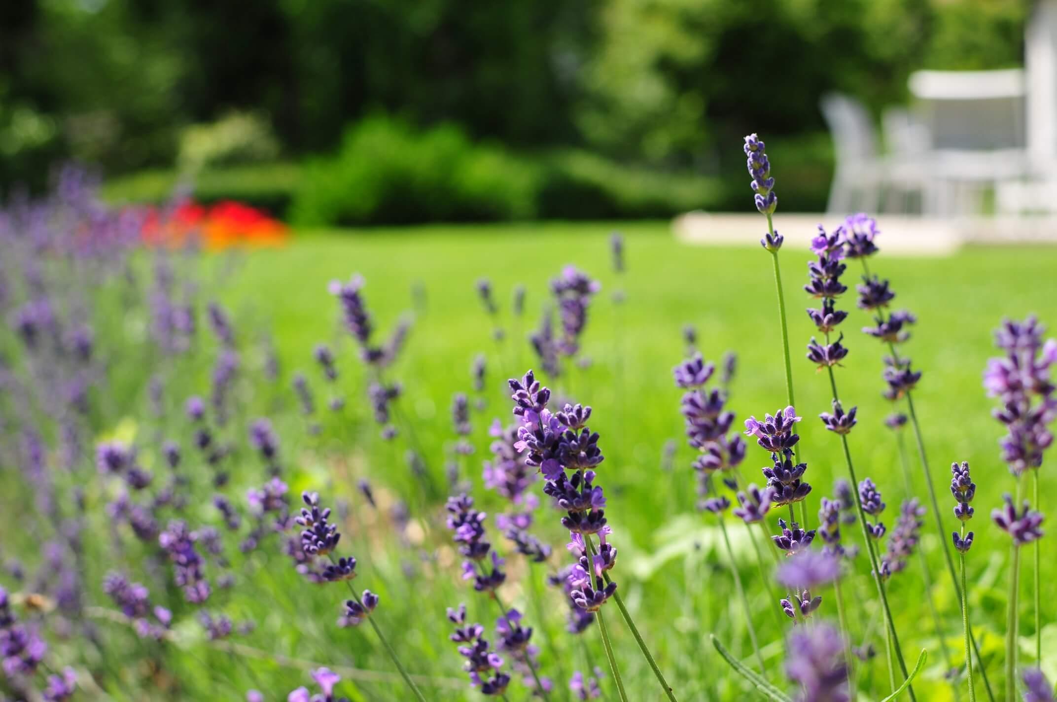 aellig paysages paysagiste jura bernois fleurs plantations gazon