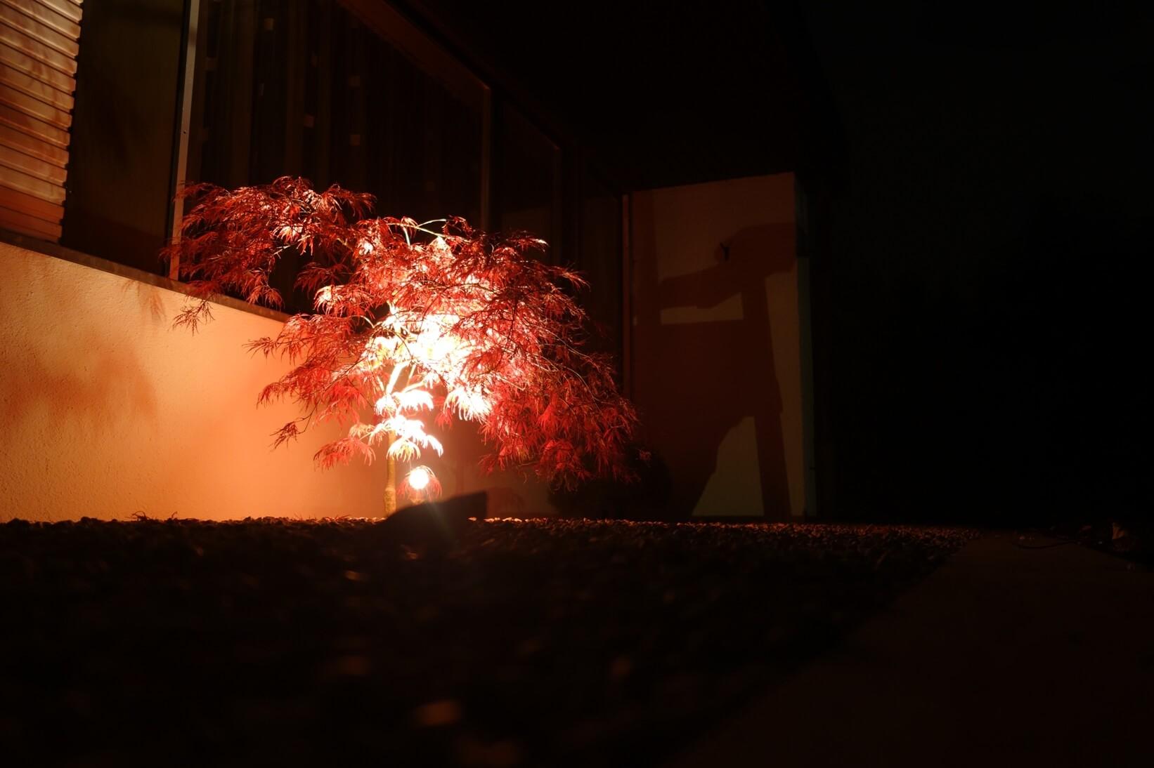 eclairage arbre professionnel aellig paysages lampes illuminer paysagiste tavannes tramelan (2)