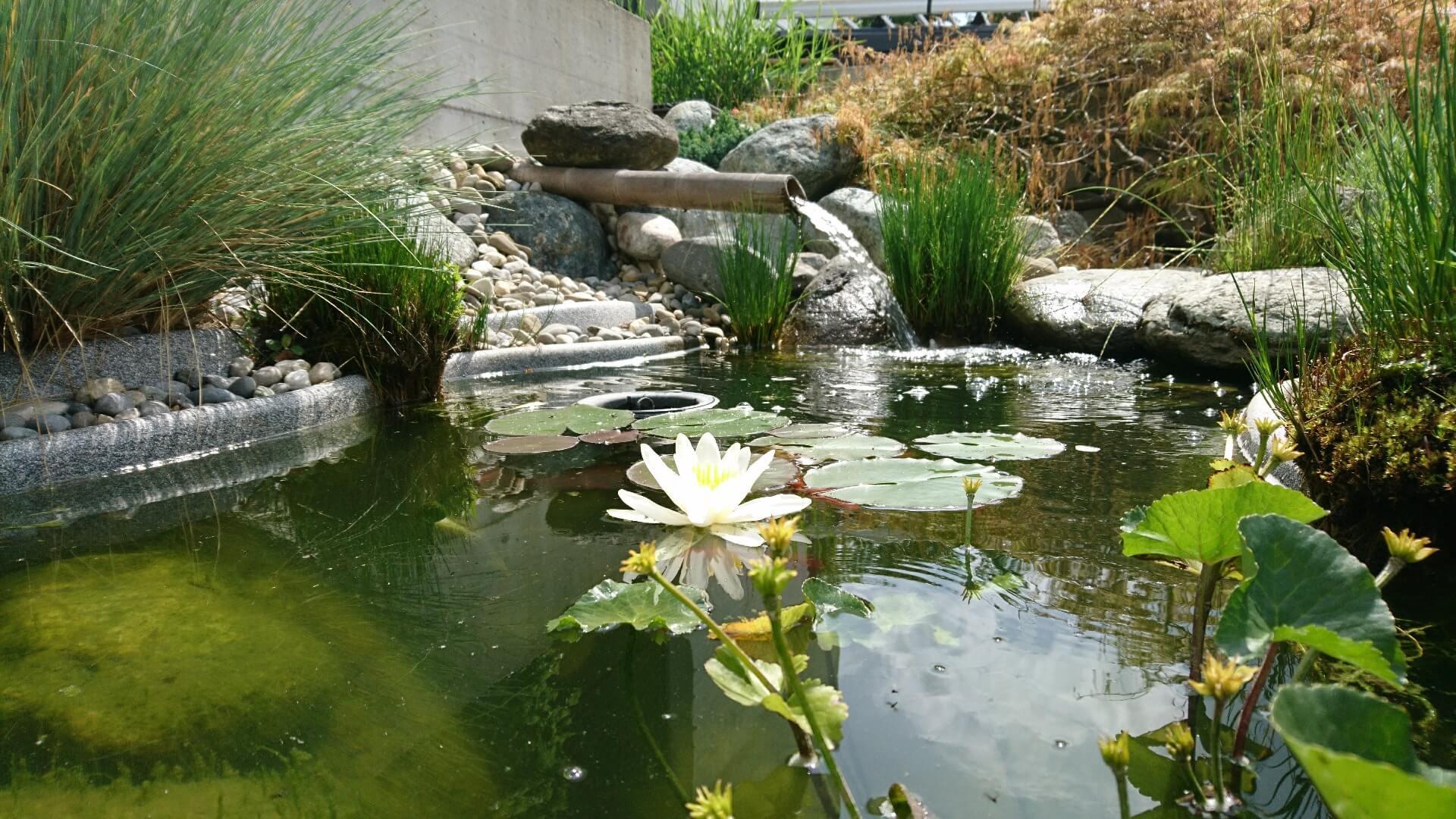 michael aellig paysages salome entretien jardin gazon taille exterieurs (5)
