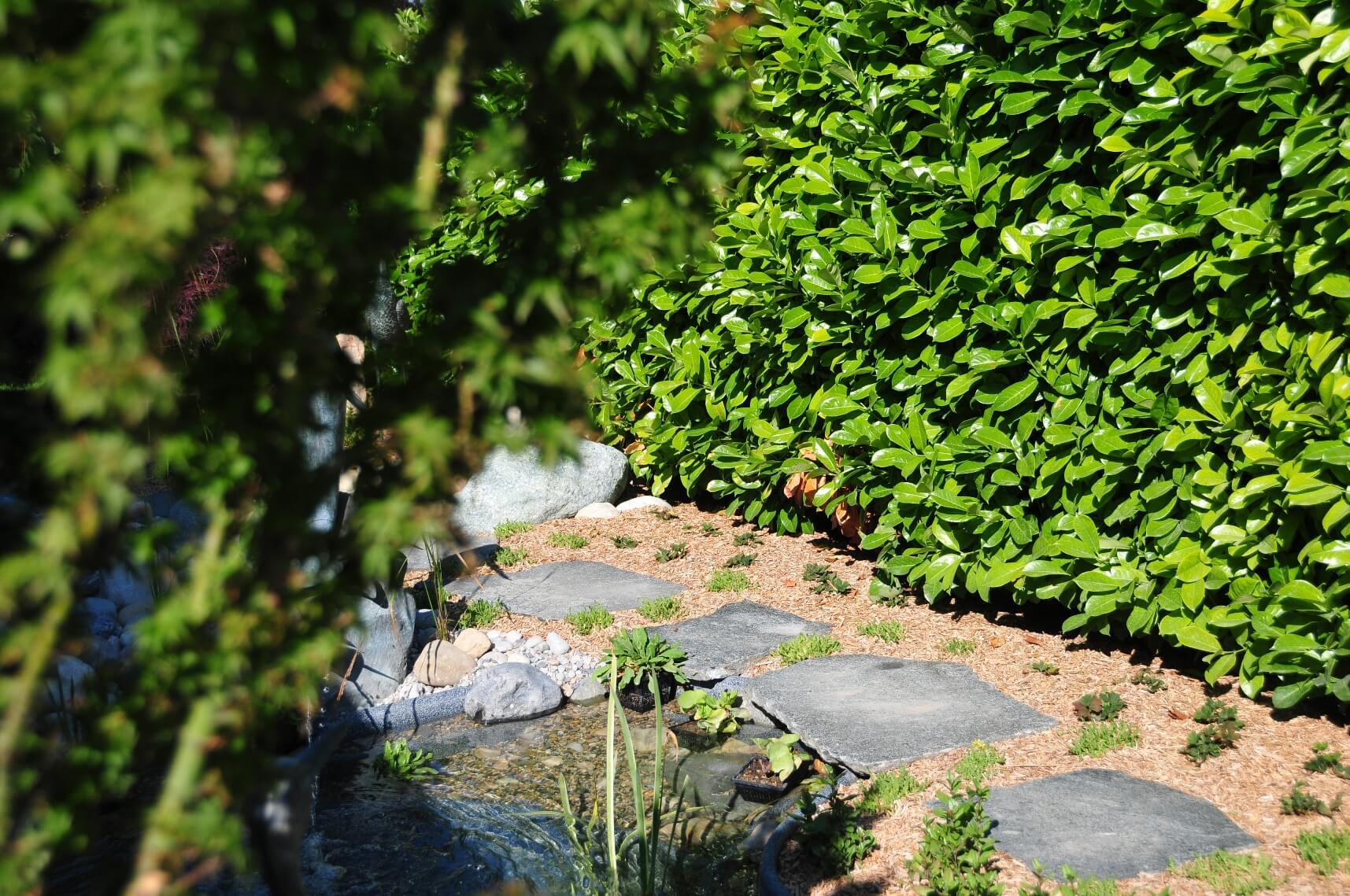 michael ellig étang bassin eau cours riviere paysagiste statues aellig paysages (10)