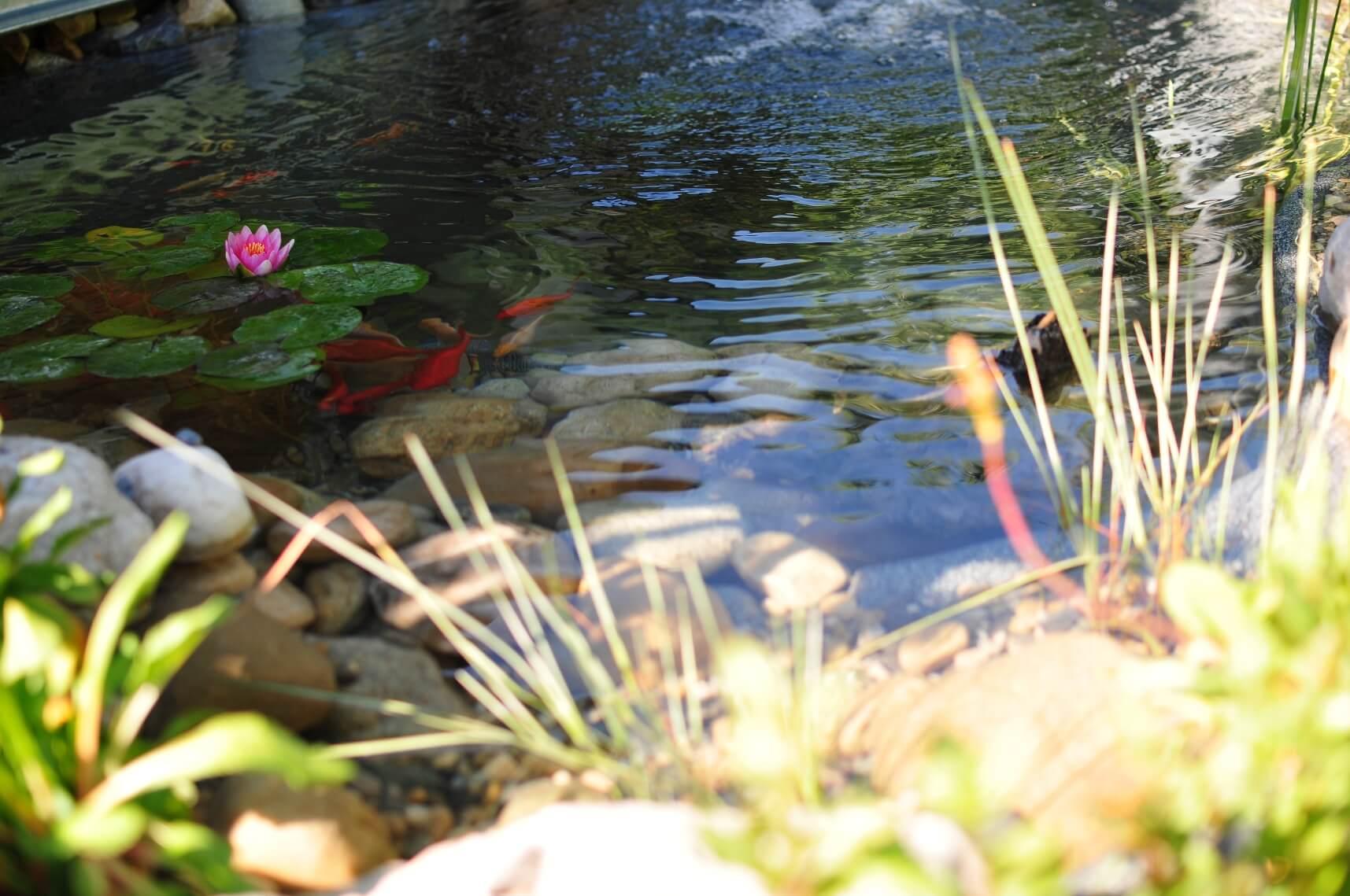 michael ellig étang bassin eau cours riviere paysagiste statues aellig paysages (6)
