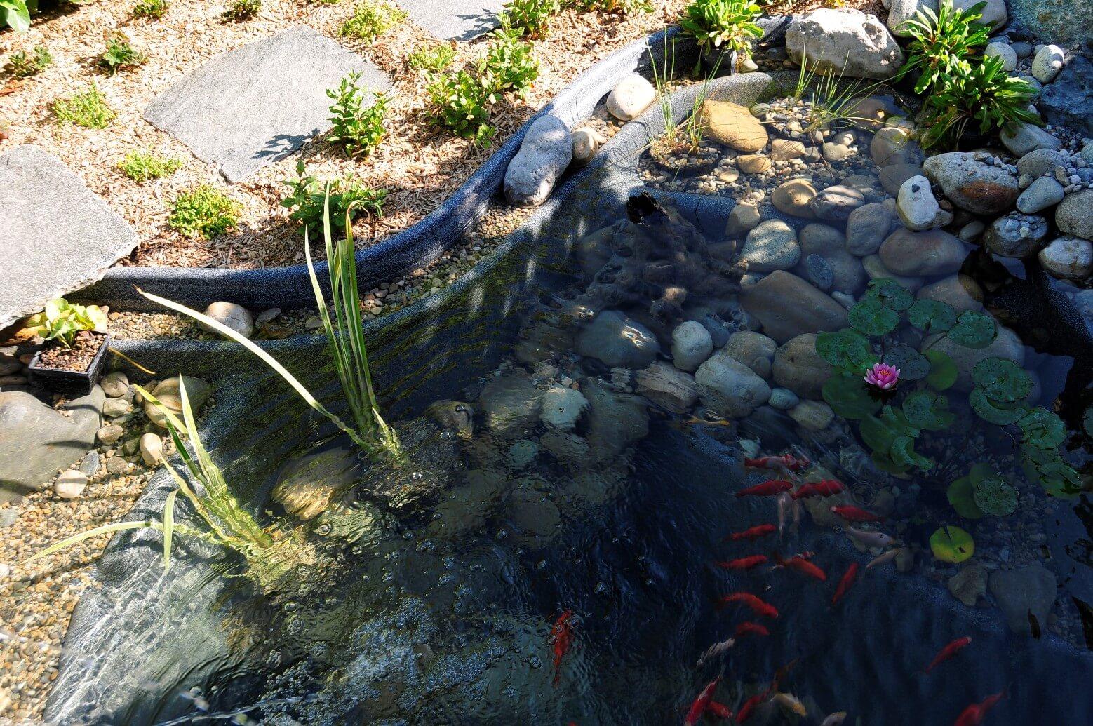 michael ellig étang bassin eau cours riviere paysagiste statues aellig paysages (9)