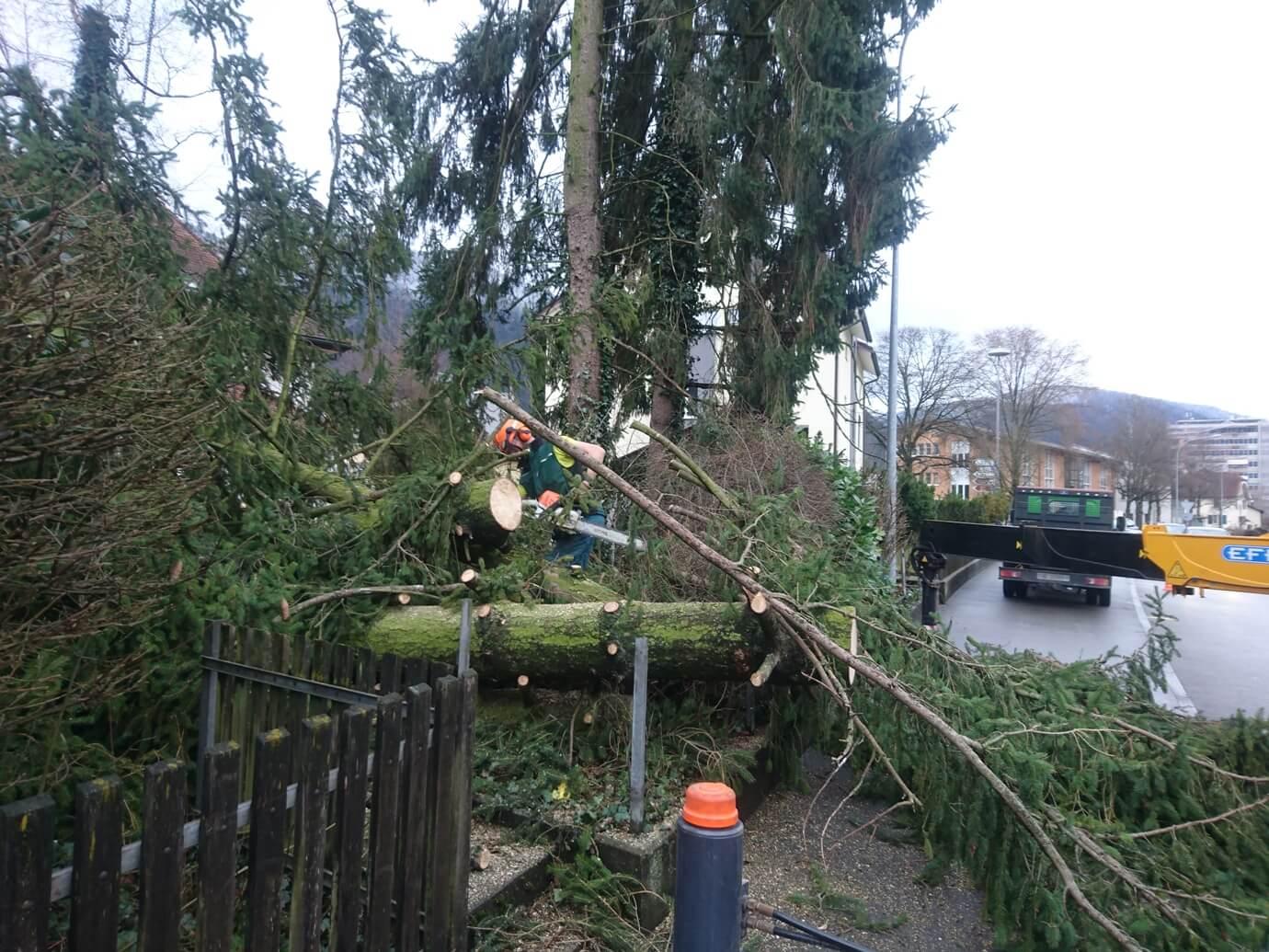 mickael aellig paysagiste moutier abattage arbre elagage abattage (2)