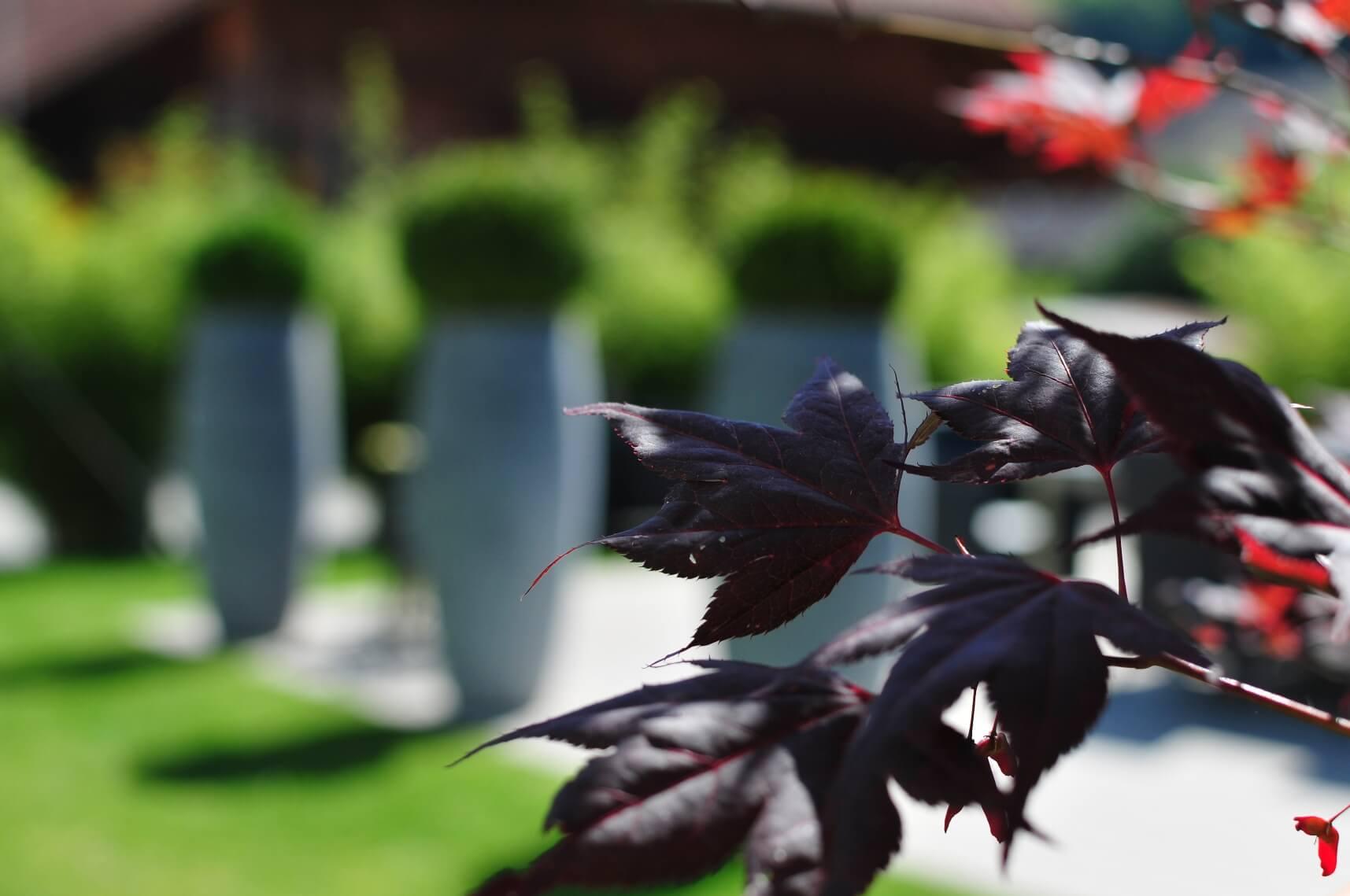 paysagiste aménagement terrasse en bois pots de fleurs bambou verdure elligue mickael (11)