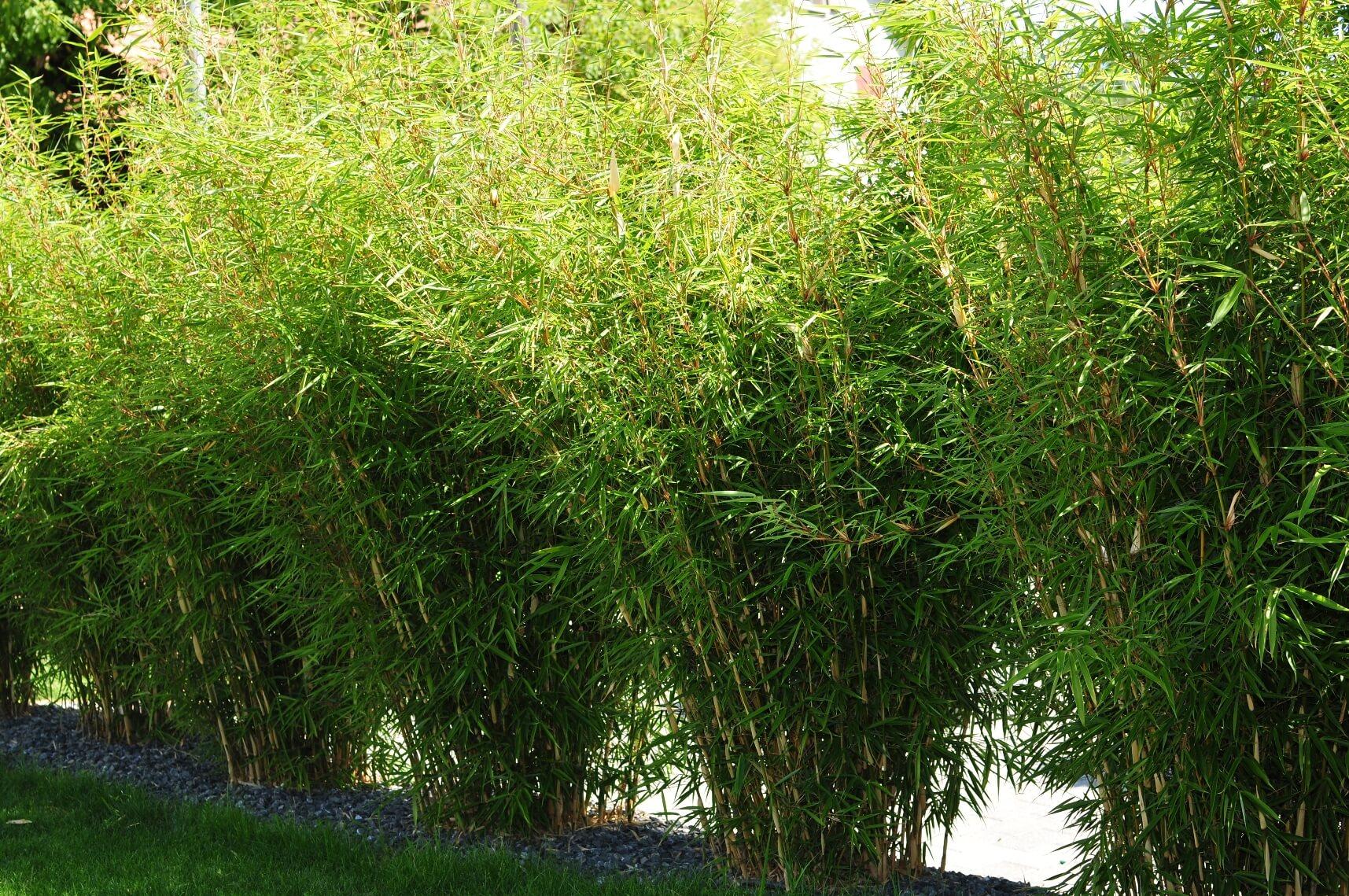 paysagiste aménagement terrasse en bois pots de fleurs bambou verdure elligue mickael (5)