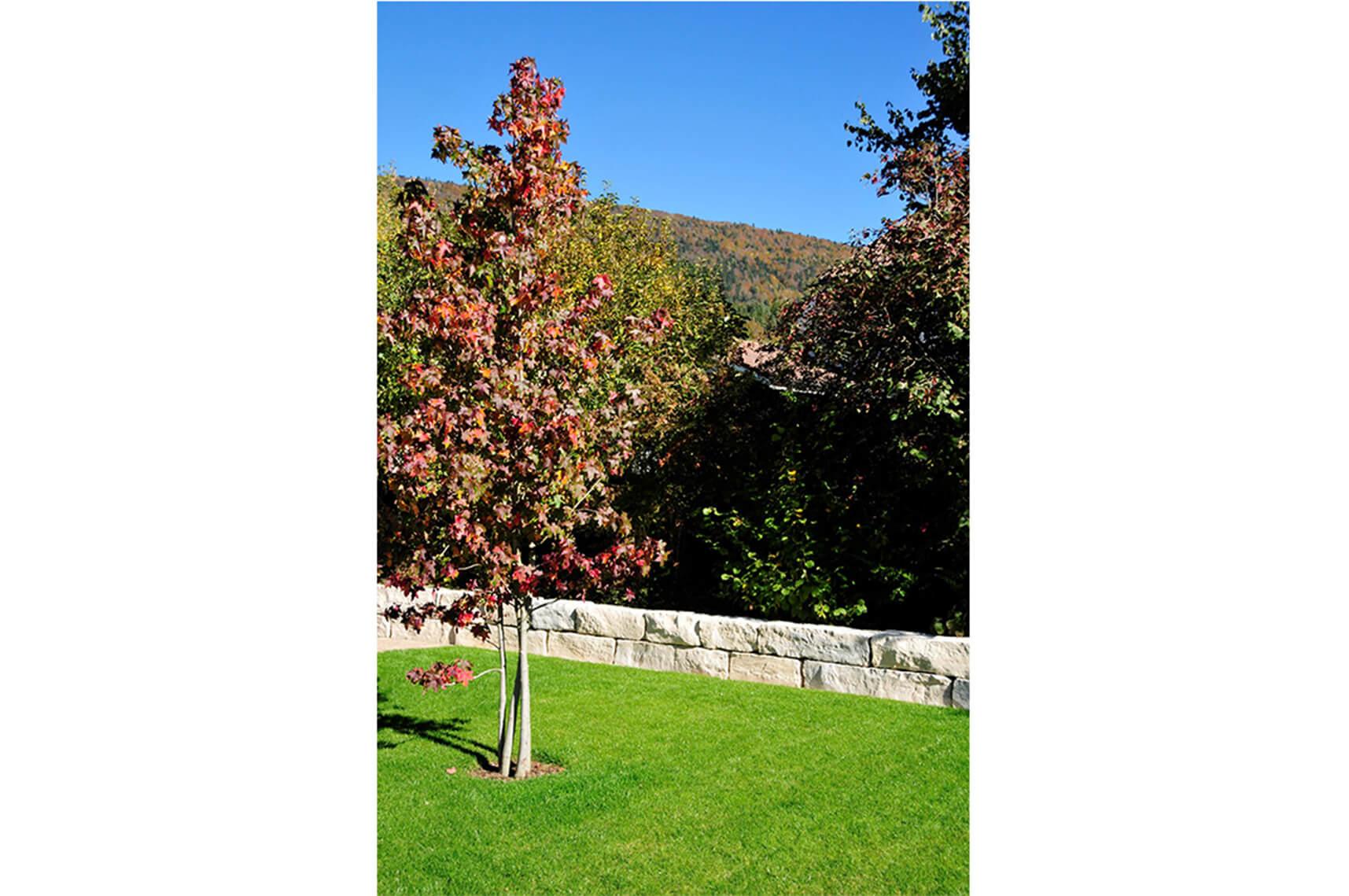 aellig paysages alentours maison familiale terrasse jacuzzi balançoires jardin talus malleray (5)