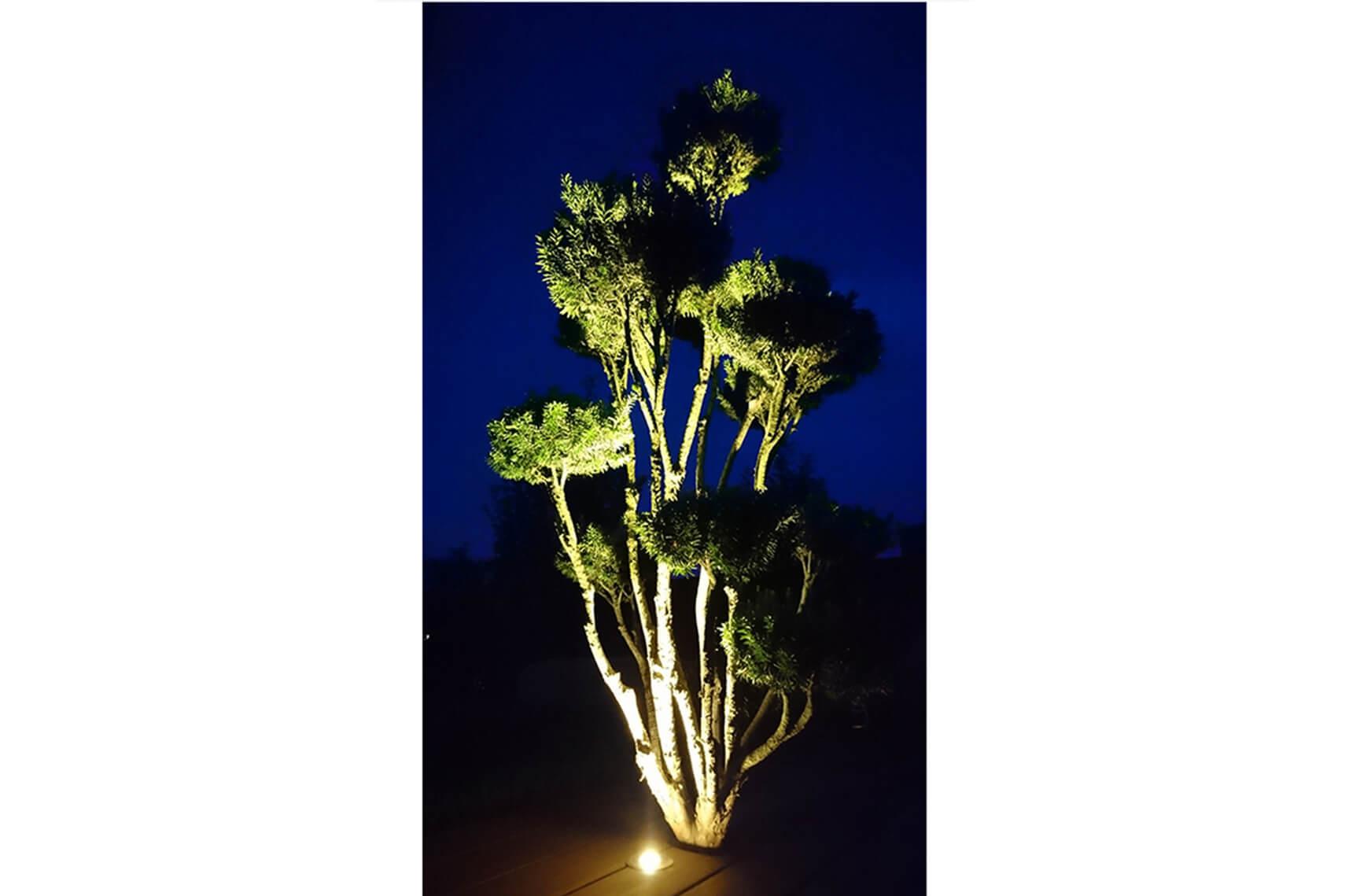 michael aellig paysages salome entretien jardin gazon taille exterieurs (4)