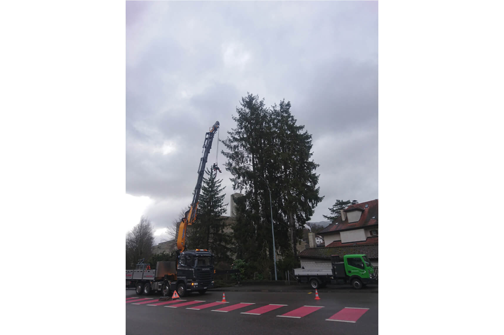 mickael aellig paysagiste moutier abattage arbre elagage abattage (1)