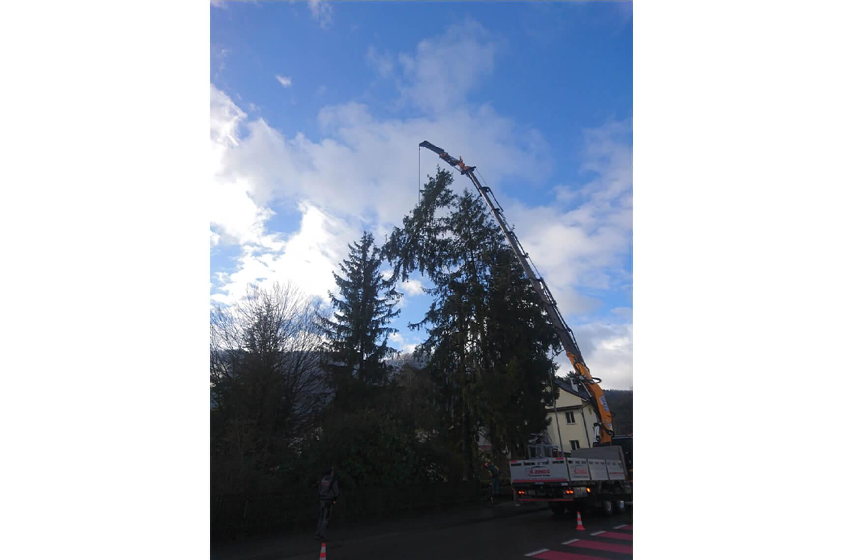 mickael aellig paysagiste moutier abattage arbre elagage abattage (4)