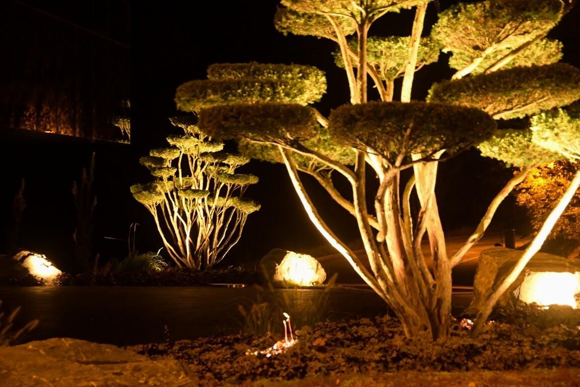 aellig paysagisme jura bernois francophone professionel sol eclairage arbre ifs japonais jardins (1)
