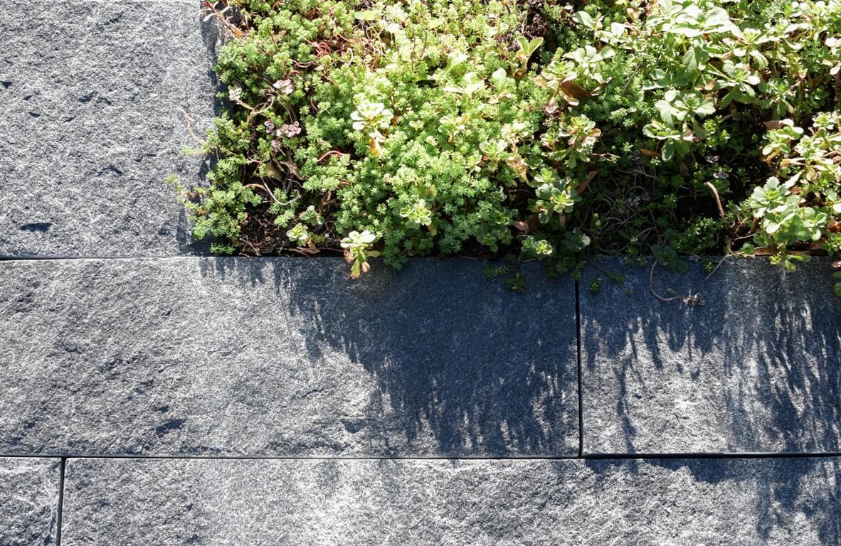 aellig paysagisme jura bernois francophone professionel sol eclairage arbre ifs japonais jardins (2)