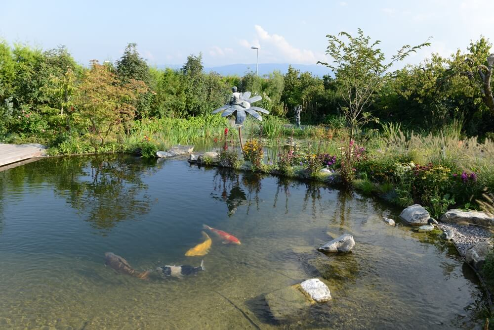 aellig paysages piscines naturelles koi poissons exterieur jura bernois camionettes vertes vert flash pet paysagiste (1)