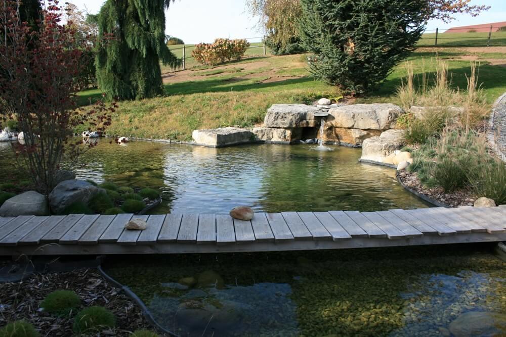 aellig paysages piscines naturelles koi poissons exterieur jura bernois camionettes vertes vert flash pet paysagiste (6)