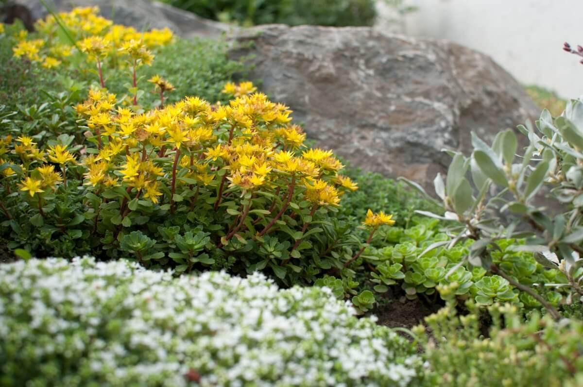 camionnette jaune camion paysagistes malleray tavannes reconvilier neuveville bienne aellig elligue paysages plantes murs fleurs (5)
